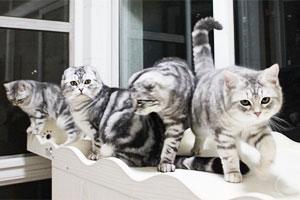 家有六猫的幸福生活