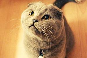 胖猫坨坨:胖也要胖的有霸气