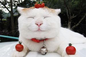 猫叔精彩照片大集合