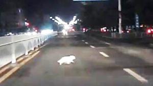 【山西】小白猫横穿马路