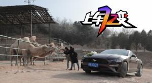 """【上车72变】整个动物园的猛兽都惧怕这匹""""野马"""""""