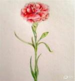 江门利辰母亲节献礼 最好的爱 送给最美的你
